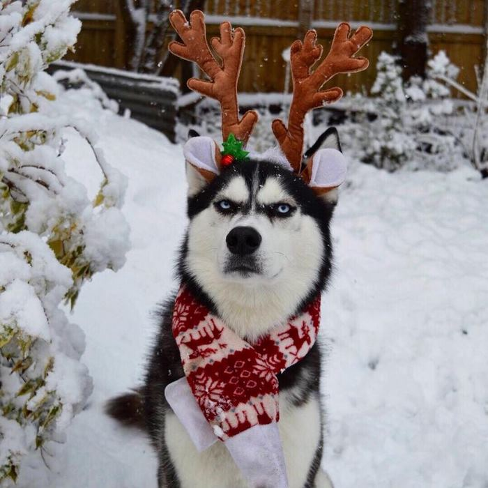 People Try To Do A Christmas Card Photoshoot With Their ...