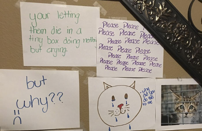Daughter Tries To Guilt Trip Her Dad Into Getting Her A Kitty Gets