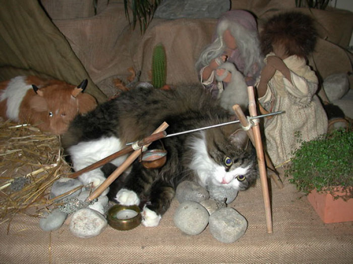 Found The Cat Laying In The Middle Of The Nativity Scene