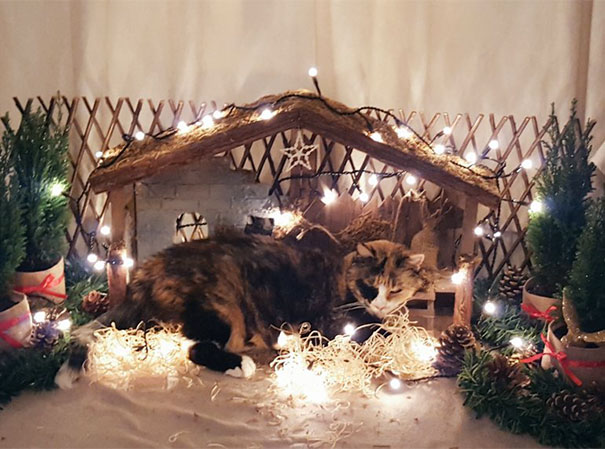 Christmas Is Cancelled By A Giant Cat That Squashed Baby Jesus And Ate The 3 Wise Men