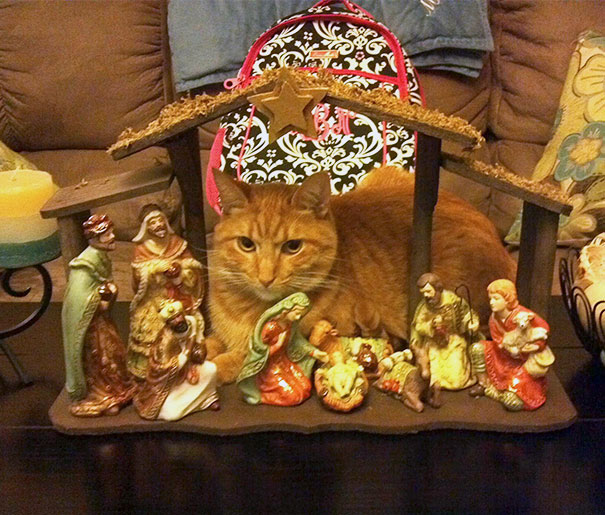"Dad Sent Me This Picture With The Comment, ""He Brought Gold, Frankincense, And Purr"""