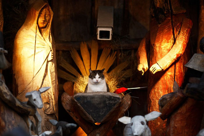 A Cat Sits In The Nativity Scene Outside A Church