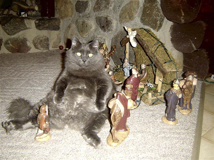 There Was A Cat In The Manger With Baby Jesus...