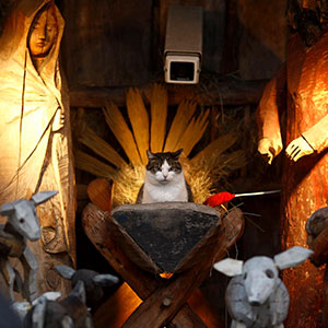 20+ Times Cats Hilariously Crashed Nativity Scenes