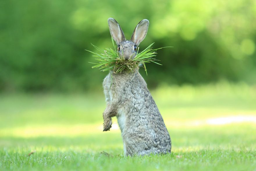 "Highly Commended ""Eh What's Up Doc?"" By Olivier Colle"