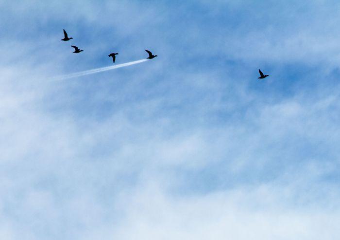 """Ganador en la categoría Aire, """"Velocidad de pato"""", John Threlfall"""