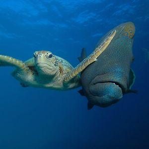 "Winner Of The Padi Under The Sea Category ""Slap"" By Troy Mayne"