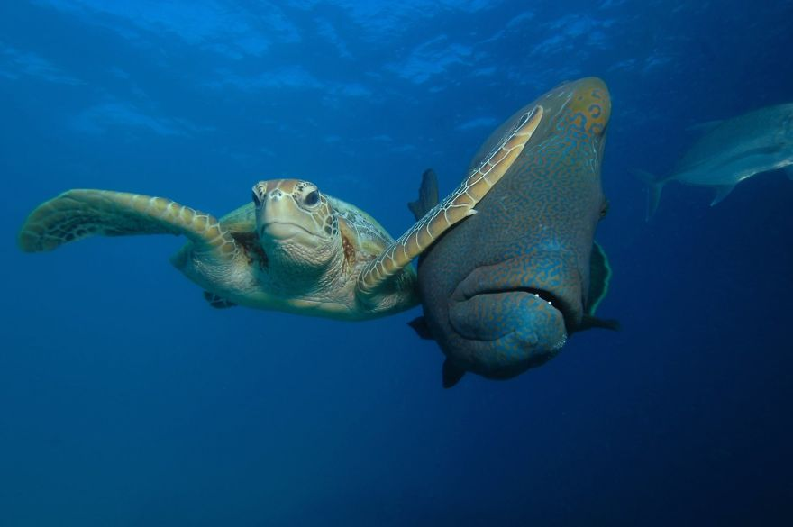 "Winner Of The Padi Under The Sea Category ""Slap"" By Troy Mayne"
