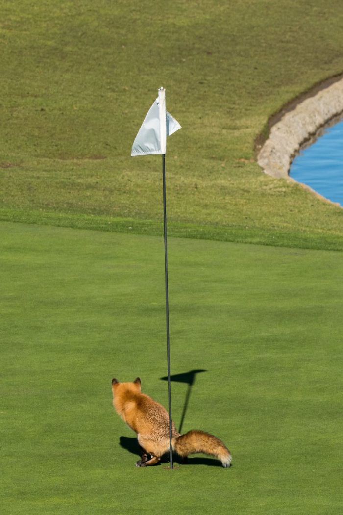 "Highly Commended ""Must Have Three-Putted"" By Douglas Croft"