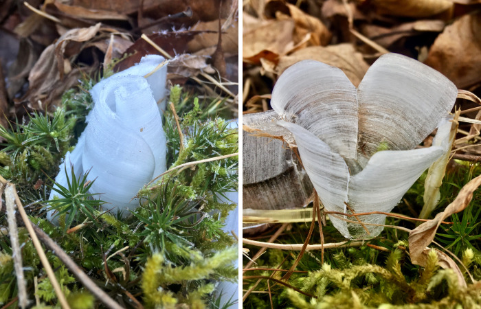 Elsa, Eat Your Heart Out! These Frost Flowers Are Real Material For A Frozen Fantasy