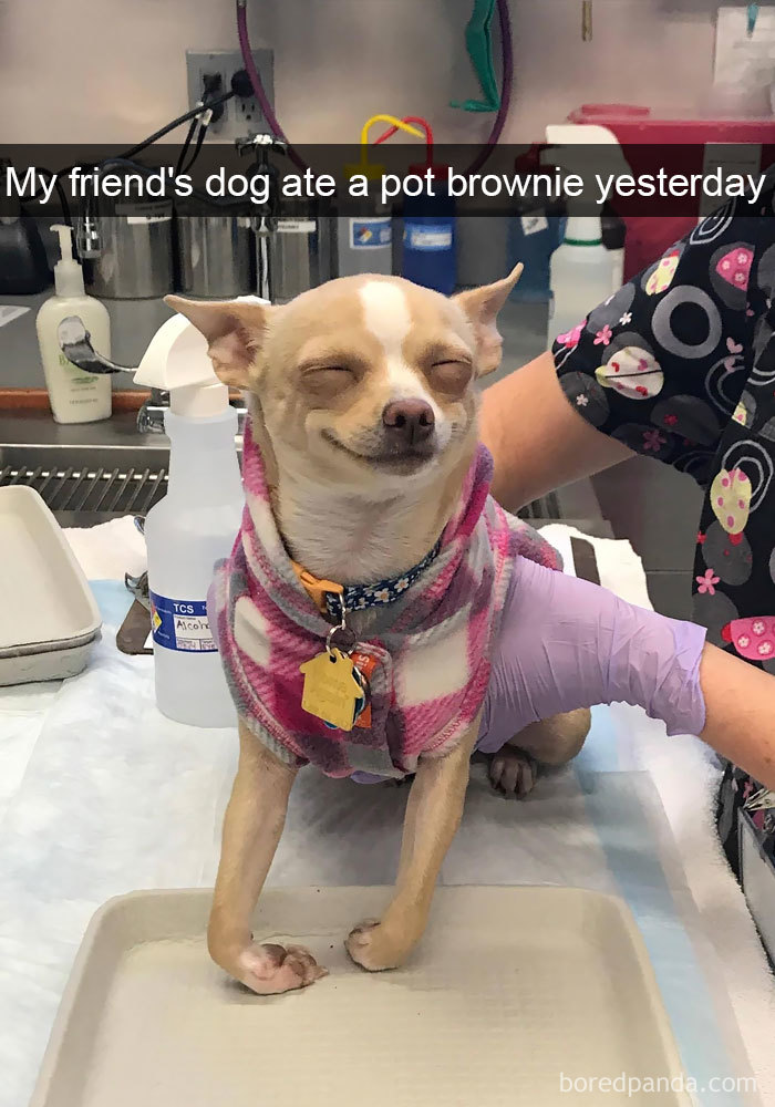 What Happens When A Dog Eats Weed Brownies