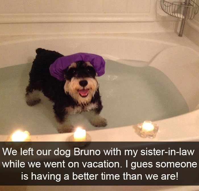30 Hilarious Dog Snapchats That Are Impawsible Not To Laugh At Part 4