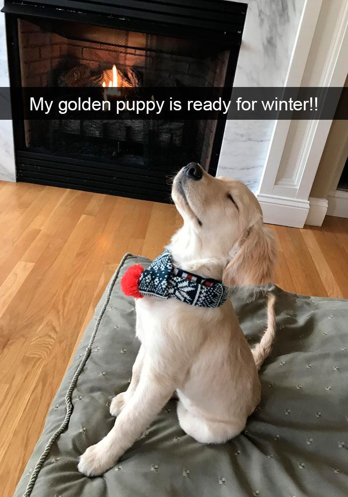 Dogs-Funny-Snapchats
