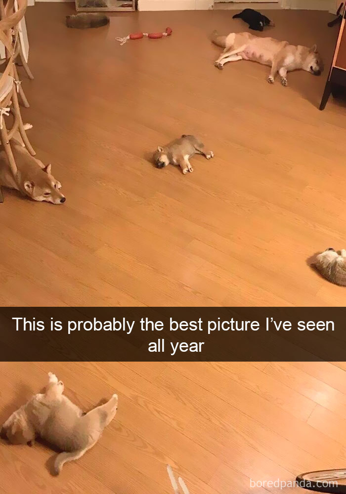 Image of: Cat Snapchats Funny Dog Snap Bored Panda Funny Dog Snap Bored Panda