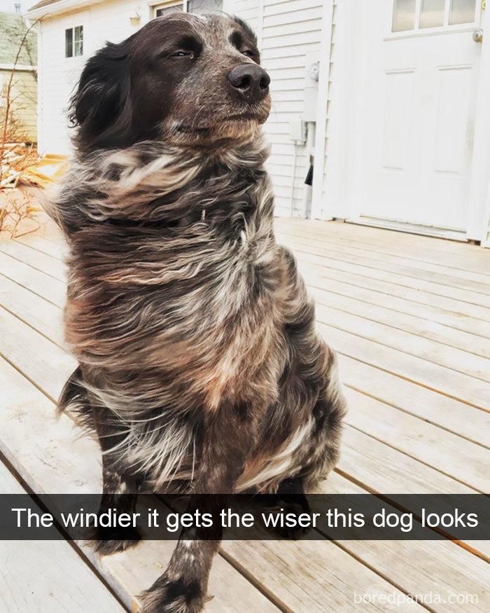 Funny Dog Snap
