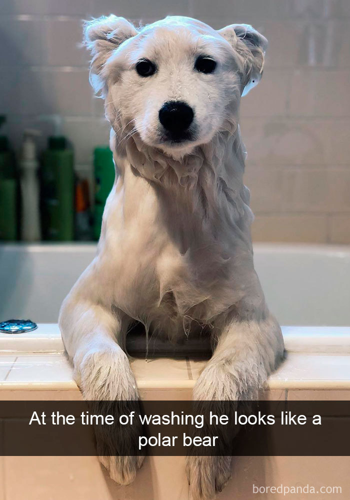Image of: Animals Funny Dog Snap Bored Panda 191 Hilarious Dog Snapchats That Are Impawsible Not To Laugh At