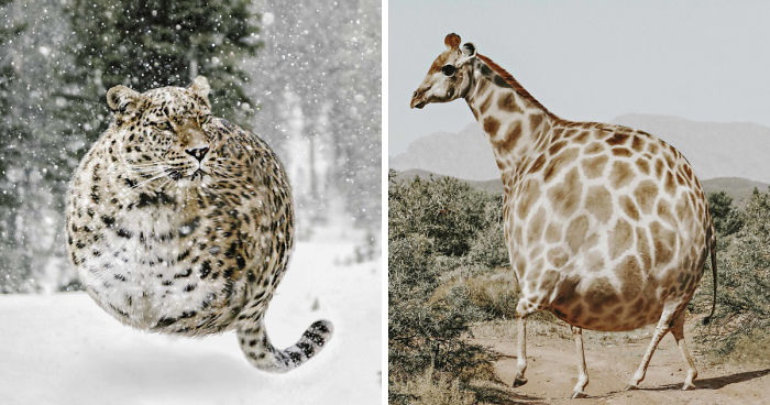 I Imagined How Animals Would Look Like If They Were Perfectly Round