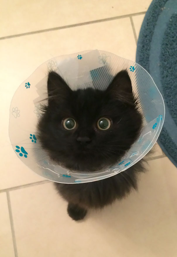 Just Got Back From The Vet