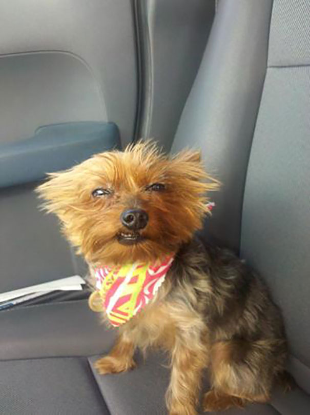 Picked My Dog Up From The Vet And She Was Still A Little High From The Anesthesia. Couldn't Help But Take A Photo Of Her
