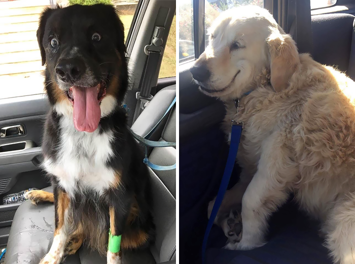 58 Pets Who Just Came Back From The Vet, And Their Expressions Say It All