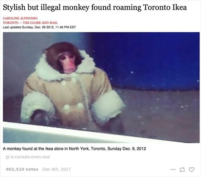 Funny-Canada-Jokes-Memes-Tumblr