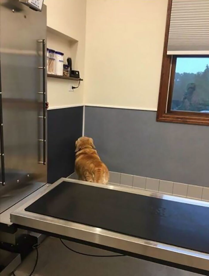 Jack's Strategy At The Vet: If I Can't See You You Can't See Me