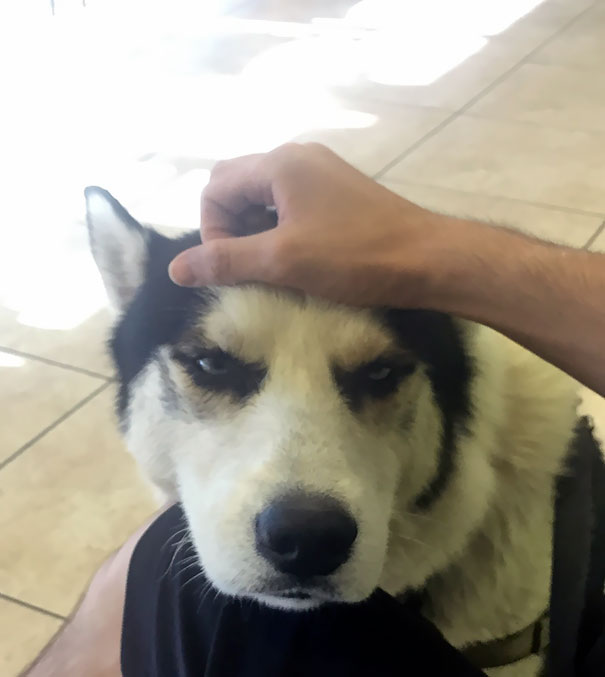 He Knows He's At The Vet