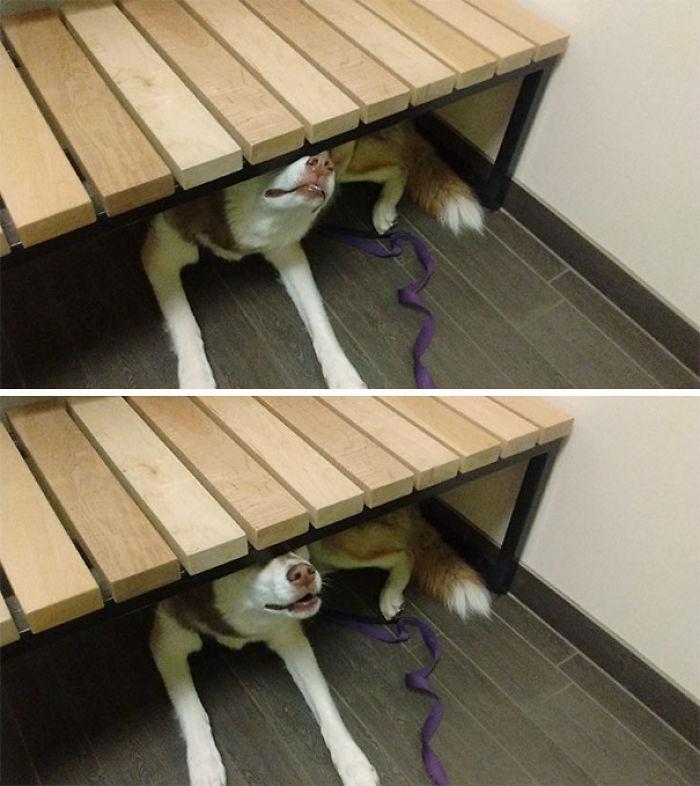 Típica visita al veterinario