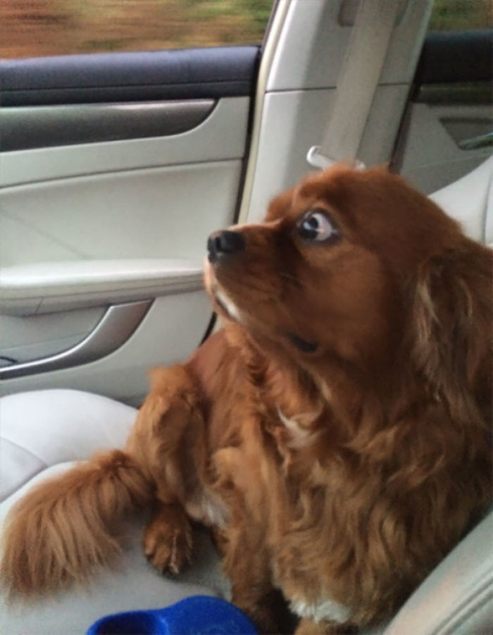 Taking My Dog To The Vet To Get Neutered I Think He Knows