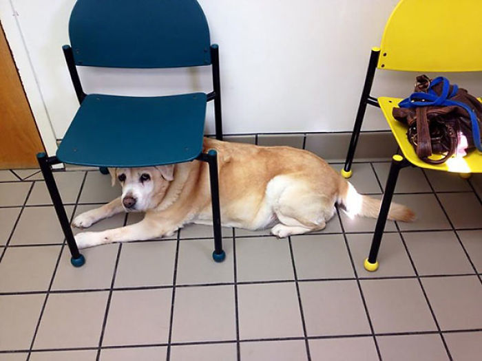 My Dog Is A Little Scared Of The Vet