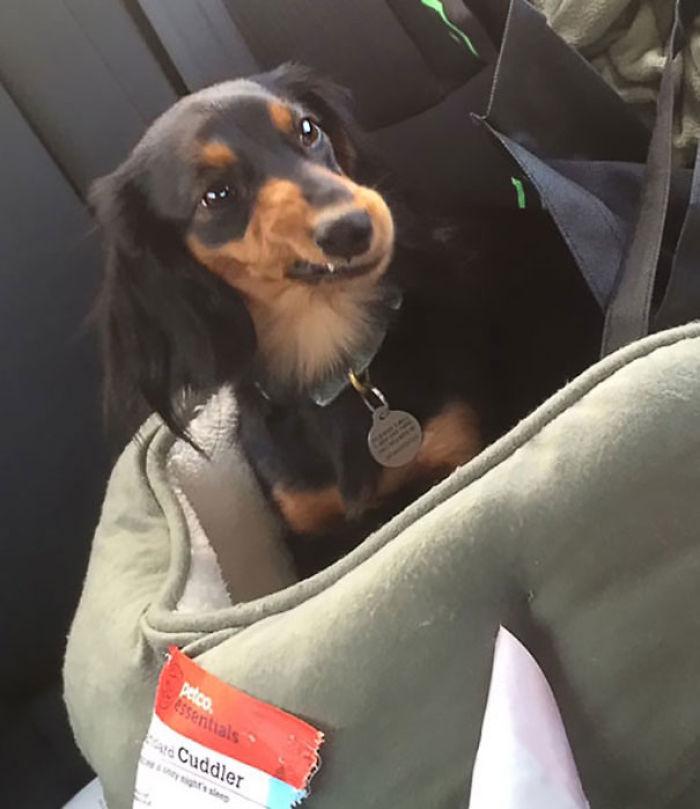 Así me miró cuando le pregunté si quería ir al veterinario