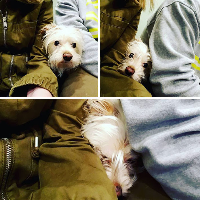 Scenes From The Vet. Maybe They Won't See Me