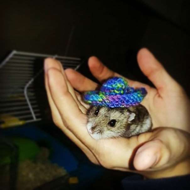 My Granny Knitted A Sombrero For My Hamster