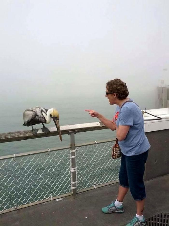 Esta ave mordió a mi abuela y ella empezó a regañarla