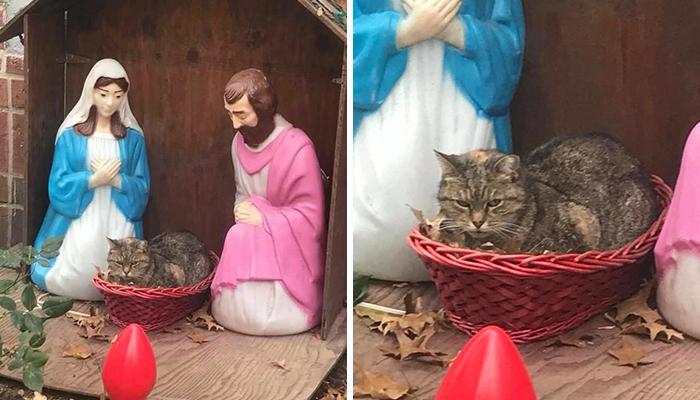 La gente no puede parar de reír después de que este gato gruñón se colase en un Belén de NYC