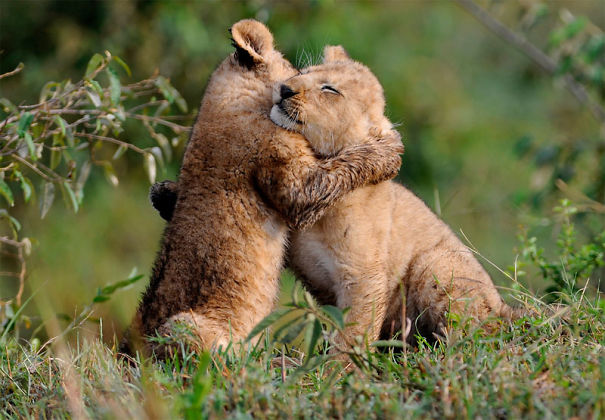 hugs-5a26e73423d5a.jpg