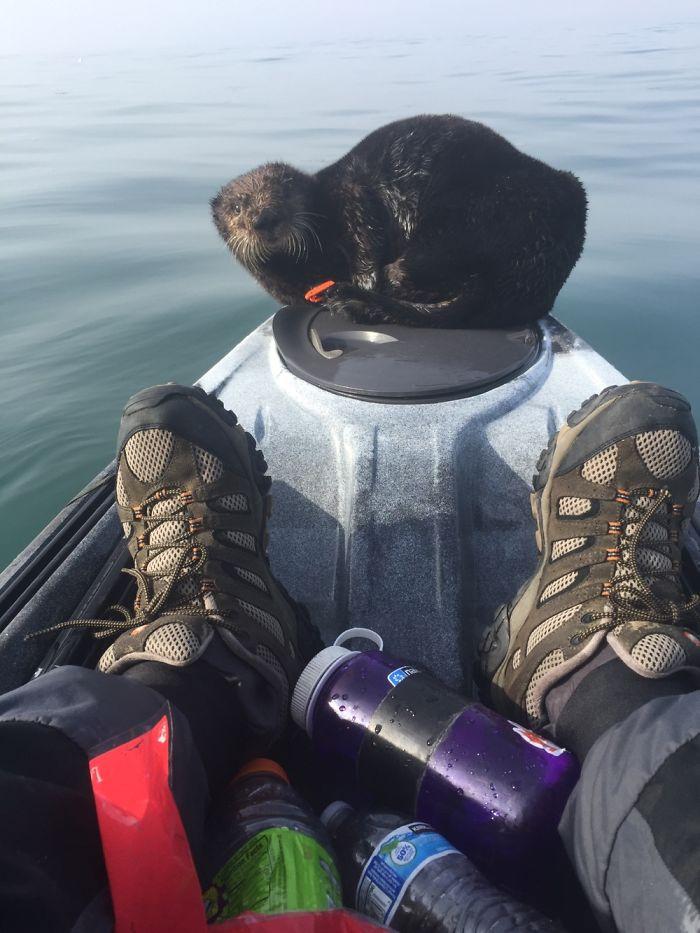 Remando en la bahía de Monterey y este amigo necesitaba que le llevaran