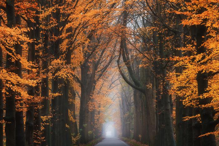 Mediados de otoño
