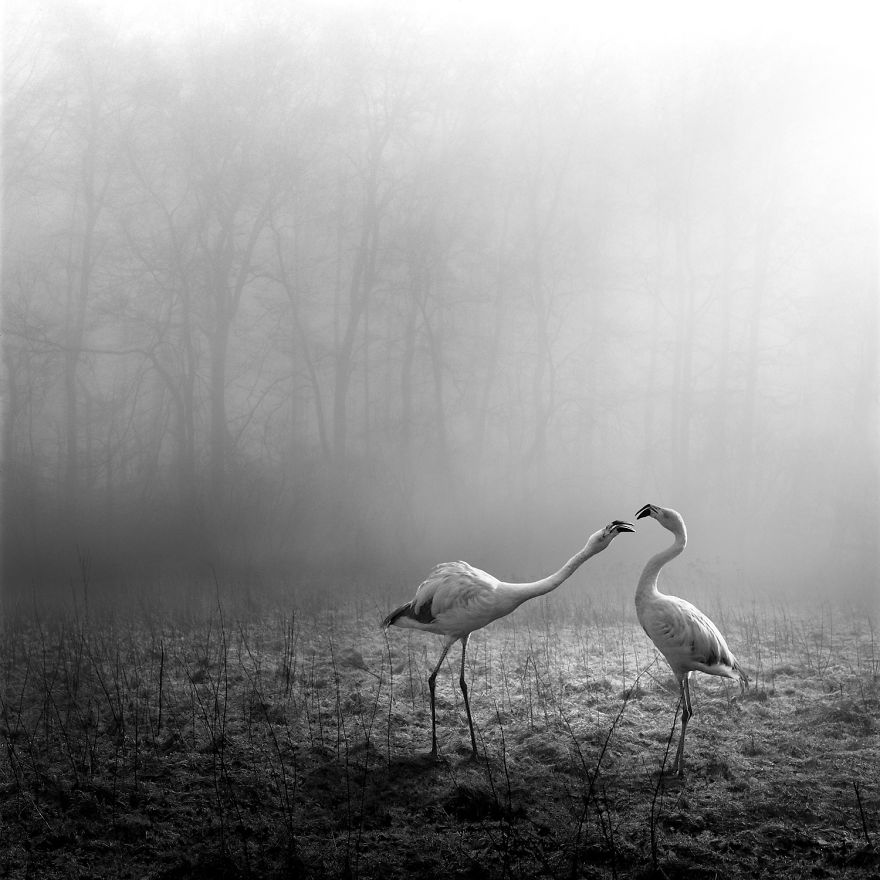 Amazing Misty Forest Pictures Full Of Animals