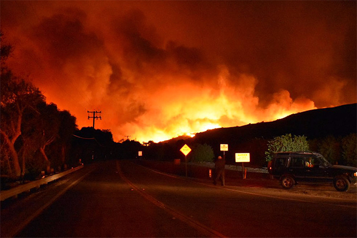 man-saves-bunny-wild-fires-california-8