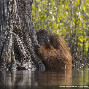 Grand Prize Winner: Face To Face In A River In Borneo, Jayaprakash Joghee Bojan