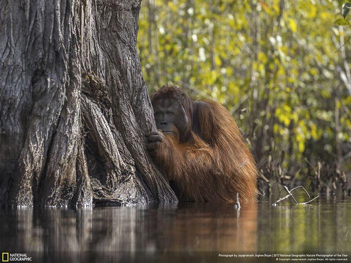 Grand Prize Winner: Face To Face In A River In Borneo, Jayaprakash Joghee Bojan