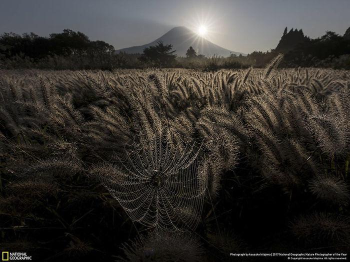 People's Choice: Sparkling Spider's Nest, Kousuke Kitajima