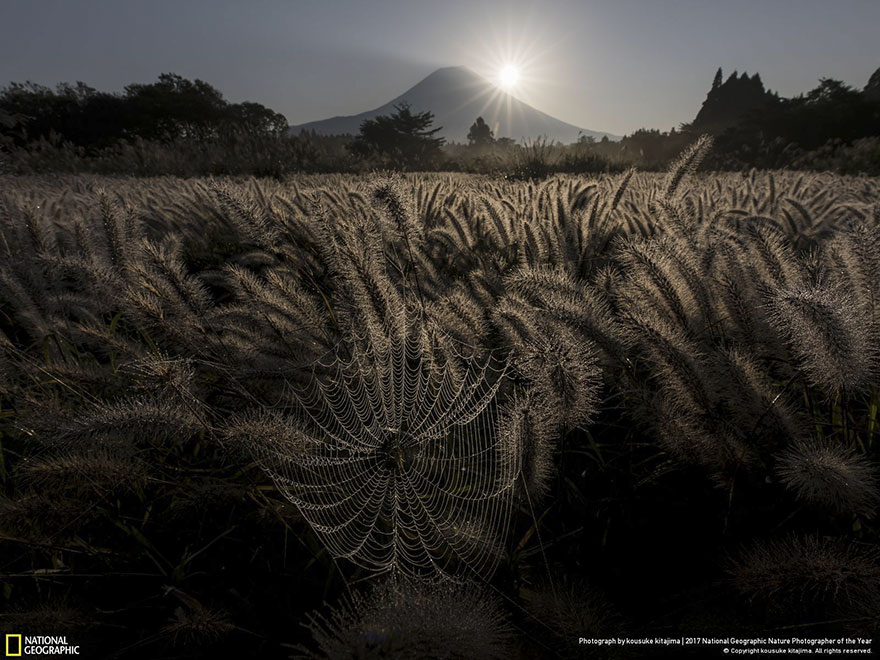 People's Choice: Sparkling Spider's Nest, Kousuke Kitajima