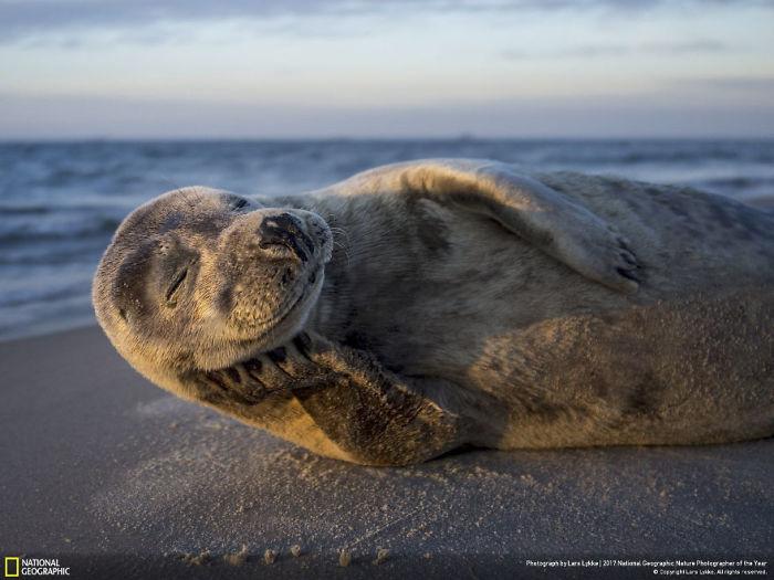 One Happy Seal Model, Lars Lykke