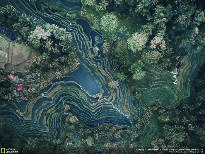Rice Terraces, Evgeny Vasenev