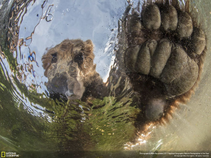 Liquid Bear, Mike Korostelev