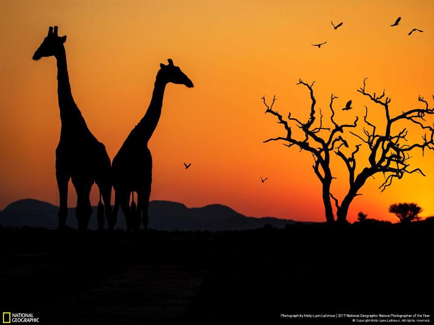 Sunset On The Savanna, Holly-Lynn Latimour