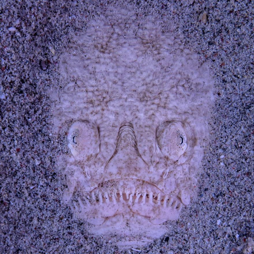Totem Stargazer Fish, Sylvie Ayer
