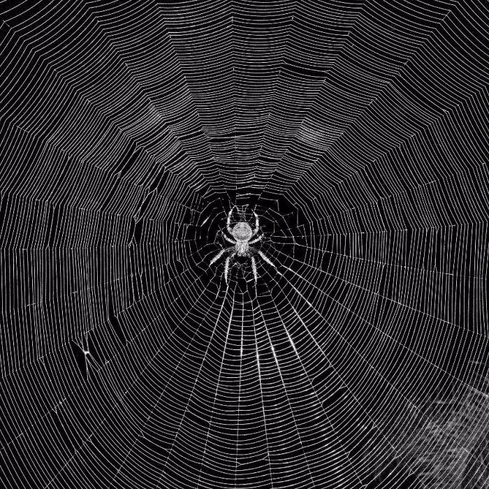 California Spider Web, Michael Cukr